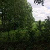 wijngaard, Eindhoven, North Brabant