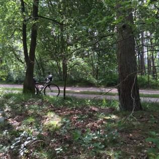 fiets naast boom