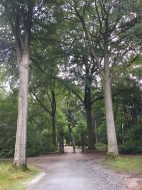 bomen, poort, padden