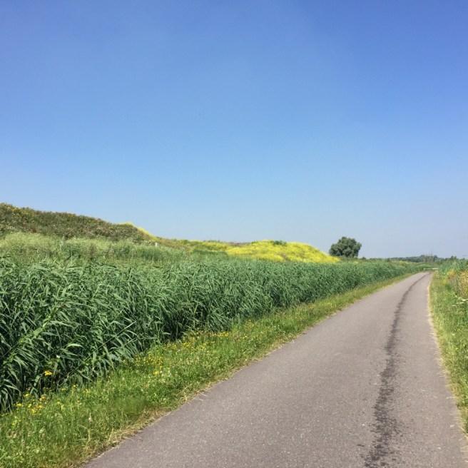 fietspad tussen Rotterdam en Den Haag