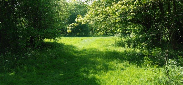 Press Release: Biffa Award brings Nature Trail to Victoria Park
