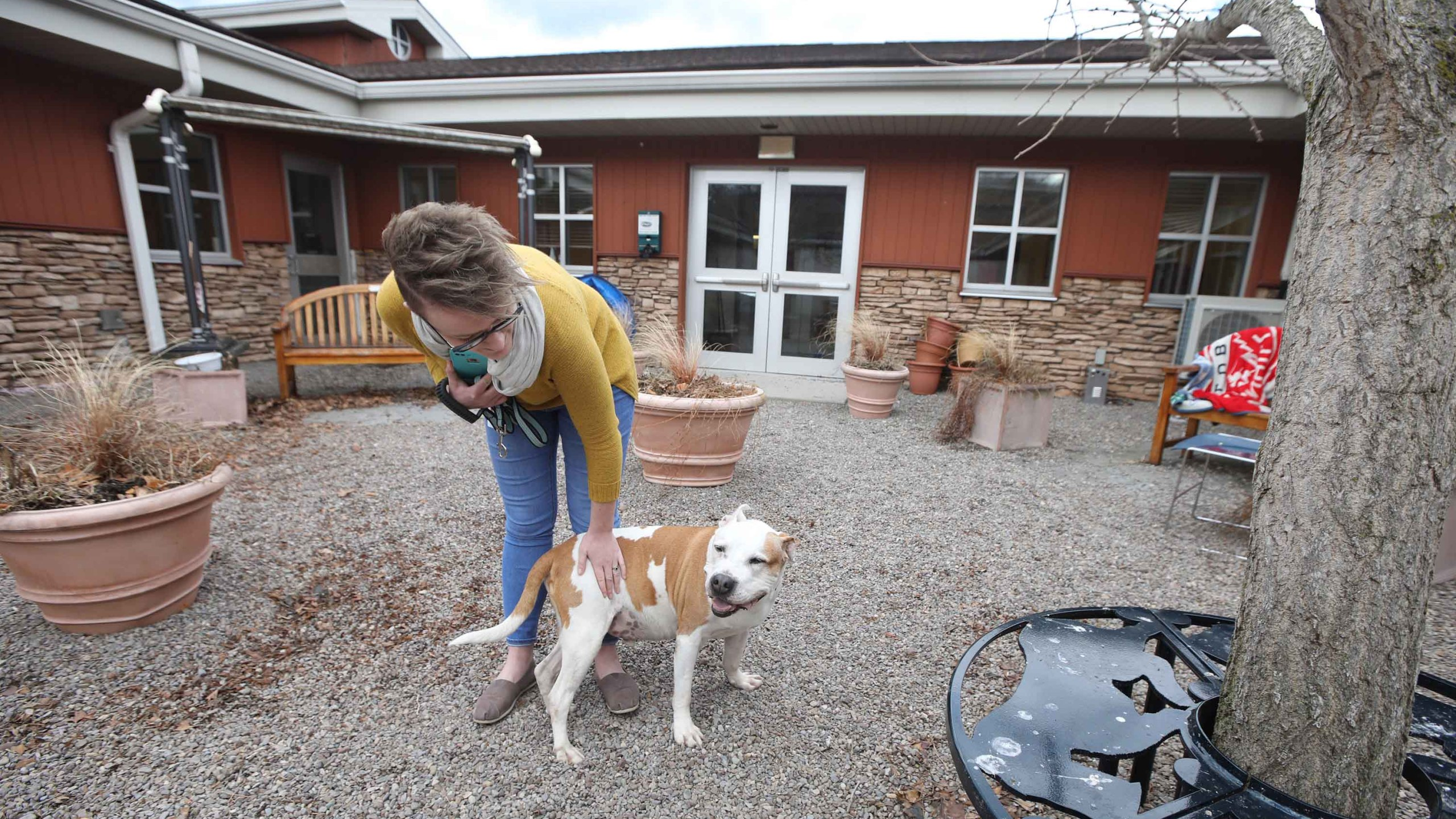 Homes for pets are in urgent need as coronavirus shuts down animal ...