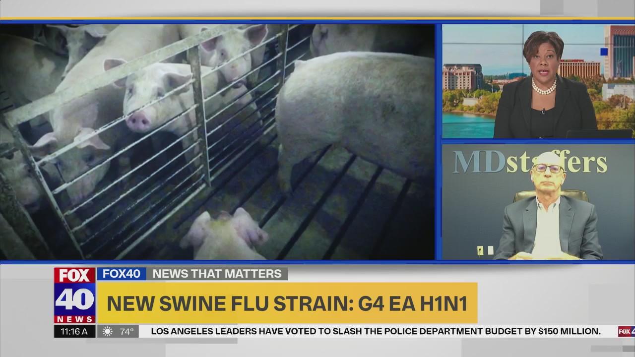 New Swine Flu Strain G4 Ea H1n1