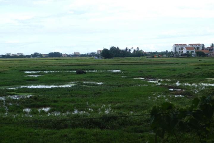 Tour en vélo dans les rizières de Hoi An