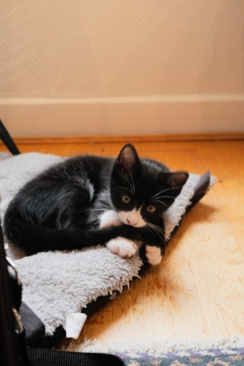 Adoption d'un chaton en appartement
