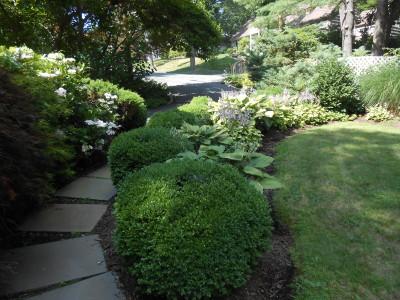 shade tolerant deer resistant plants