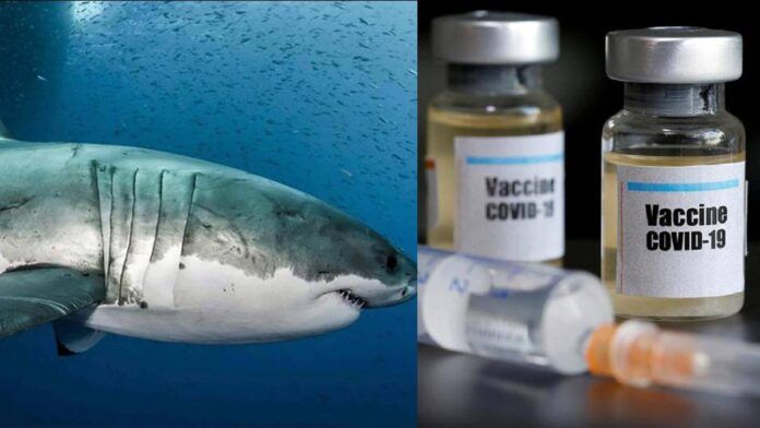 Petition filed against slaughter of 5 lakh sharks for COVID-19 vaccine