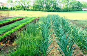 organic-farm-frederick-md