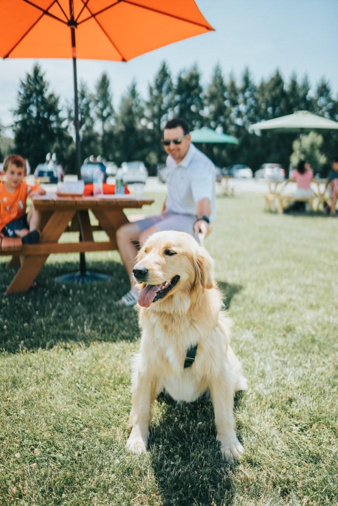 A visiting dog at Fox Run Vineyards