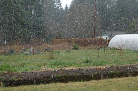 snow-in-back-yard.jpg