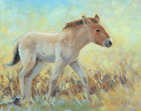 Takhi Foal; giclee on archival paper