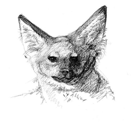 Bat-eared Fox, Kenya 2004