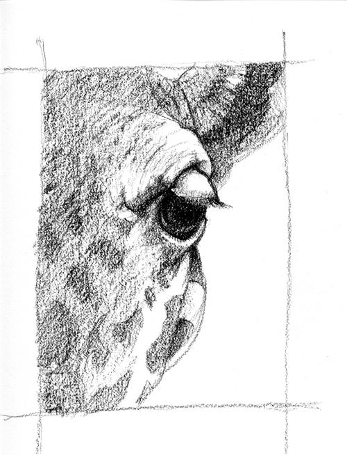 giraffe-eye