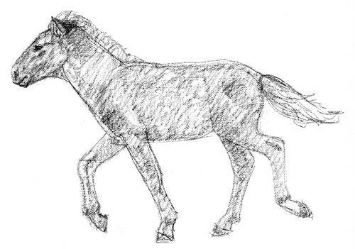 mongol-horse-foal