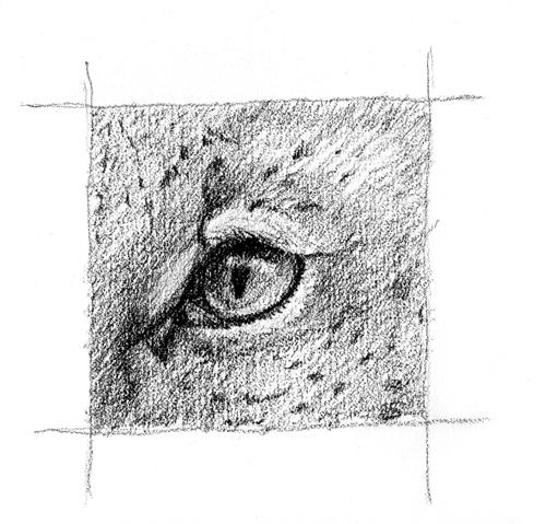 serval-eye