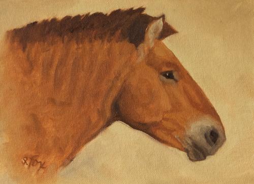 Takhi Stallion Head Study 6x8 oil on canvasboard
