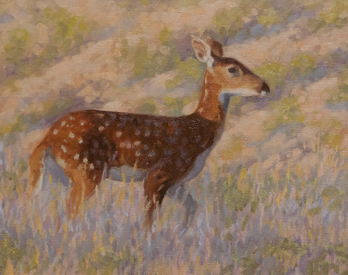 """Young White-tail Deer 8x10"""" oil on canvasboard"""