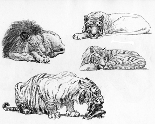 11 Recommended Drawing Books For Animal Artists