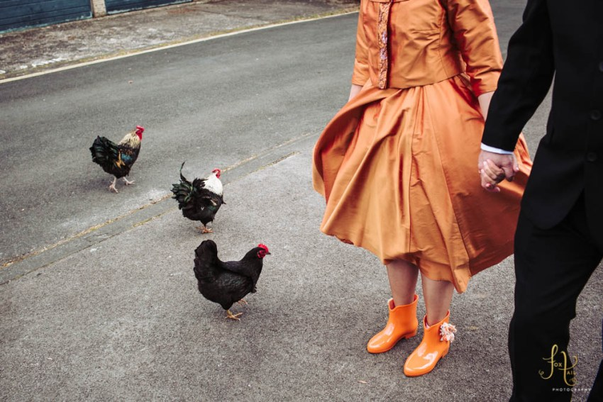 Chickens and bride in orange wellies and orange dress en route to Linton Falls.