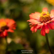 Flowers - detail near Palatul Voievodal