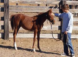 teen on ranch