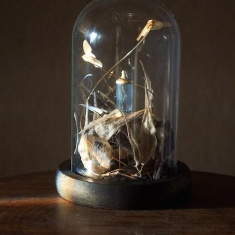 Kaitlyn_Lebrun_Rhobotany No. 4_Mixed, Naturally Deceased Moths_3x3x5_Image2