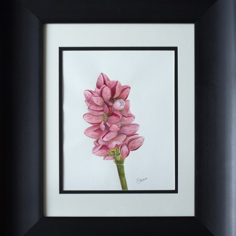 Isabelle_Jerome_Persicaria_Maculosa_watercolour_14