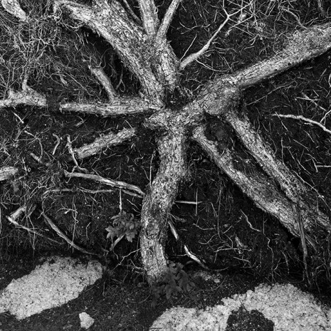 Bill Woodley_Roots on Rock_photograph print 3of25_2010_16x20unframed