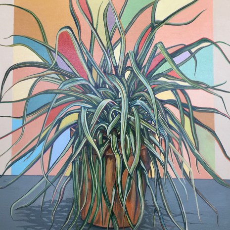 elisabeth_arbuckle_spider_plant
