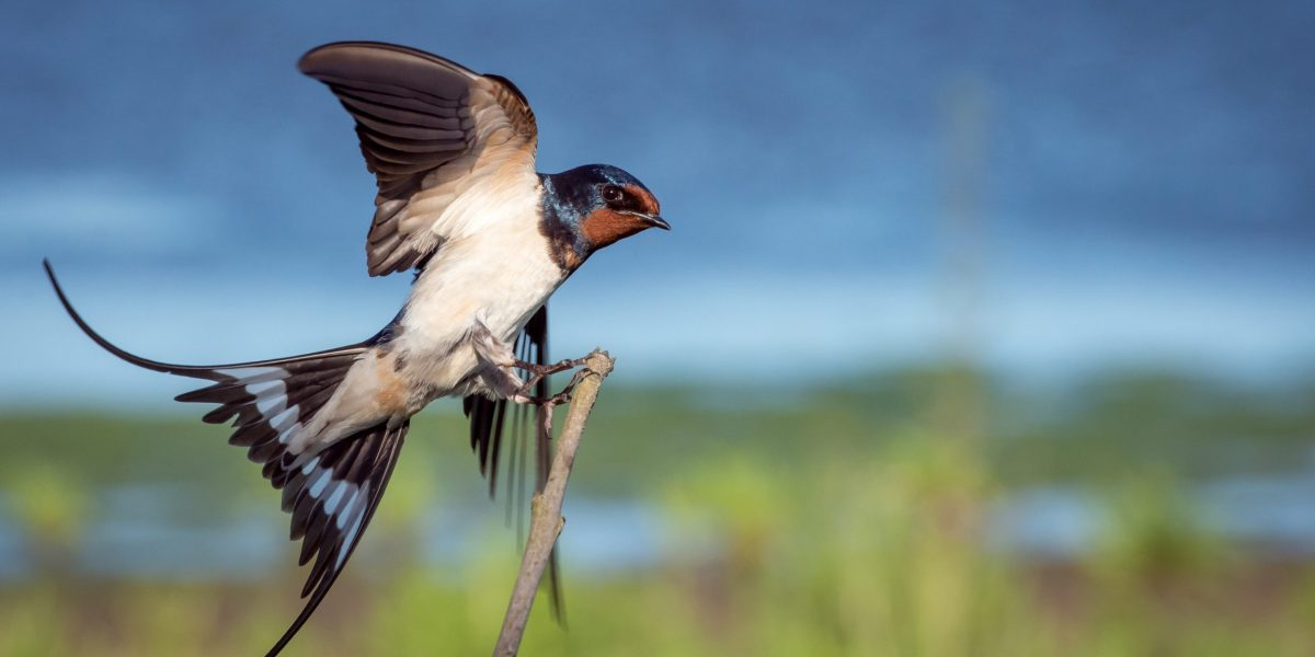 macro-photography blue, brown, and white sparrow on branch