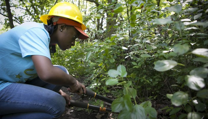 a person cutting buckthorn with loppers at Little Red Schoolhouse Nature Center