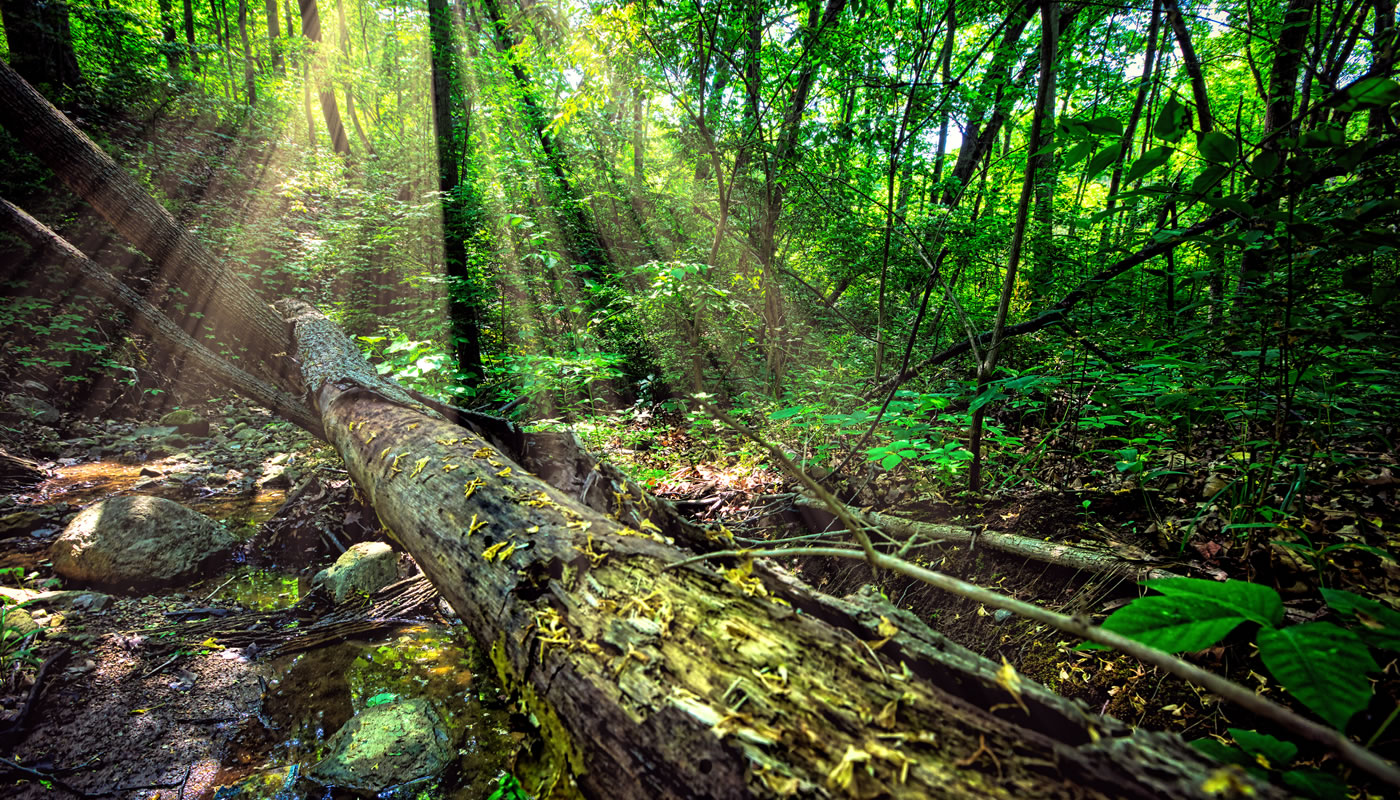 illinois nature preserves forest