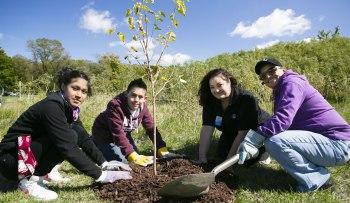 Kleb Woods Volunteer Opportunity   Citizens Environmental Coalition