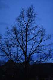 Branches (© F. P. Dorchak, Dec 11, 2016)
