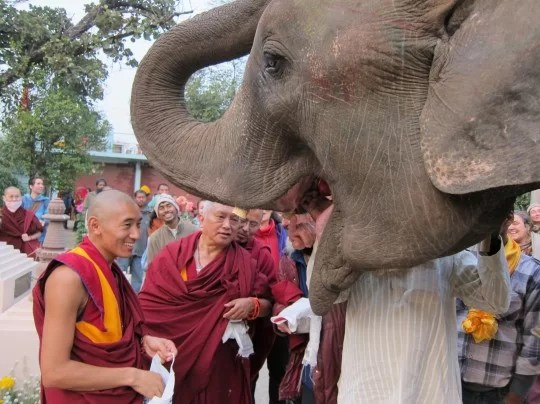 Lama Zopa Rinpoche blessing another elephant in Bodhgaya, India, 2012. Photo by Ven. Roger Kunsang.
