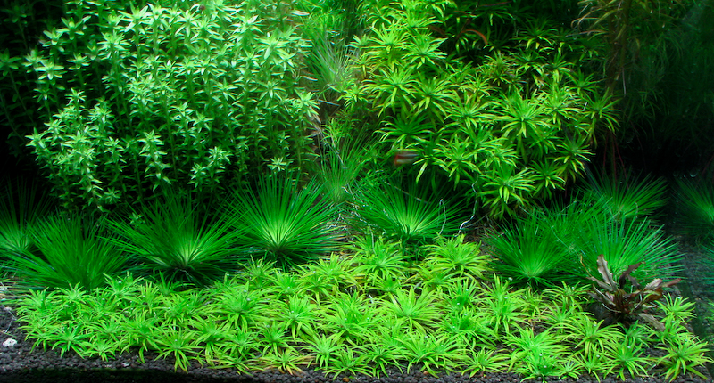 Tropical Ocean 3d Live Wallpaper The 3 Most Important Things About Picking Freshwater