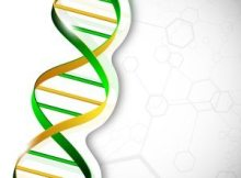 Can you Get DNA Damage from Fluoroquinolone Antibiotics?
