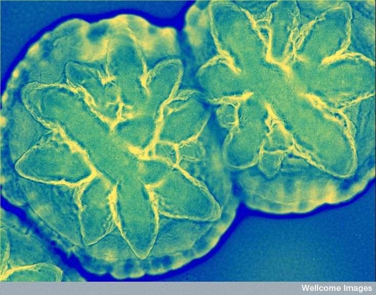 Dfinition Bactrie Eubactrie Futura Sant