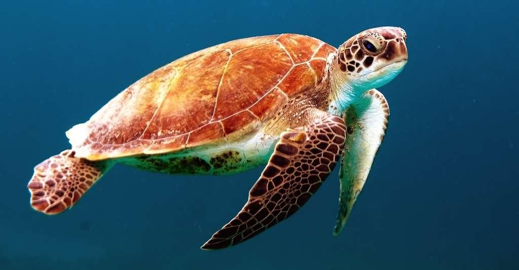 Qui aurait pu soupçonner qu'une fois morte, la tortue dégage l'odeur la plus immonde qui soit? © Unsplash, Pixabay, CC0 Public Domain