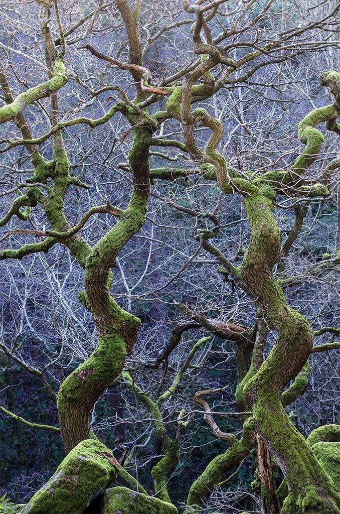 Méli-mélo de branches dans une forêt du centre de l'Angleterre, près de Sheffield. © Steve Palmer, BWPA 2016
