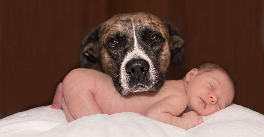 avant d accueillir un chien il faut savoir que ceux ci ont tendance