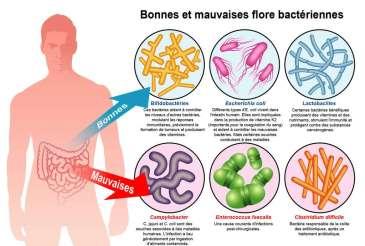 Microbiote intestinal composé de micro-organismes vivants. © Fotolia, Futura