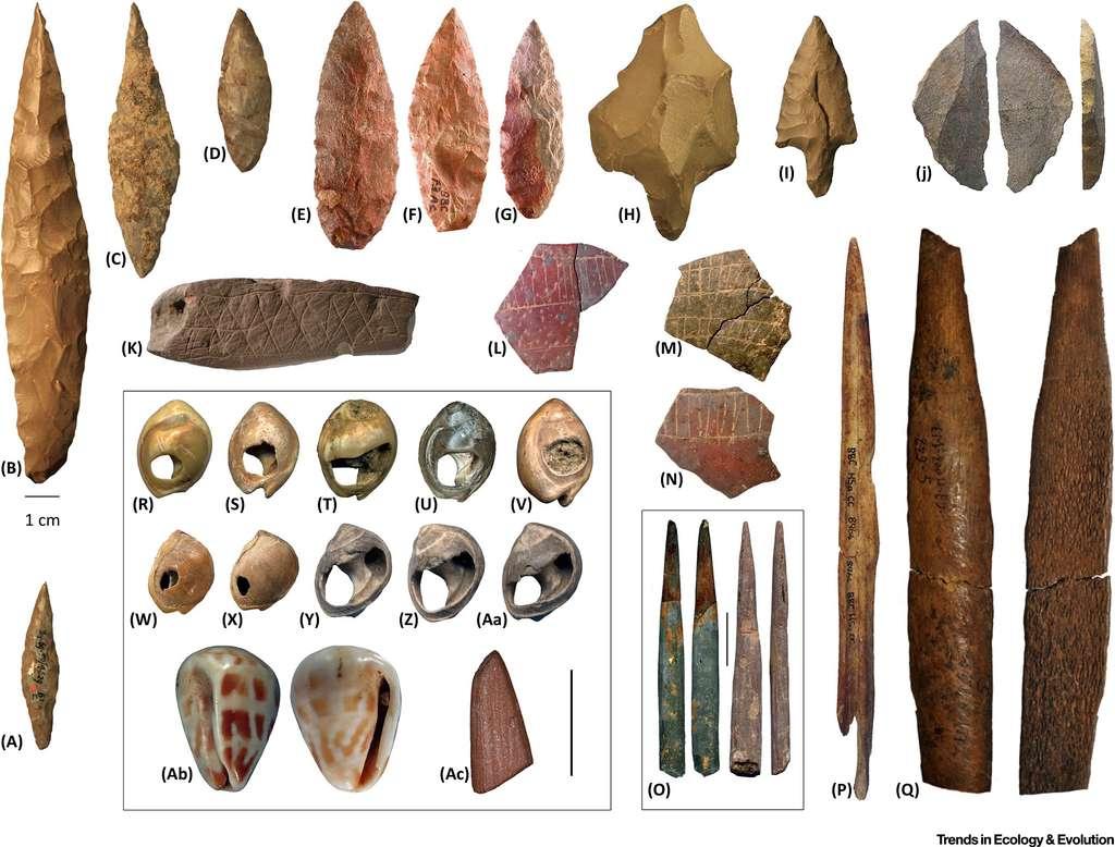 Homo Sapiens Aurait Emerge A Partir De Plusieurs Populations D Afrique