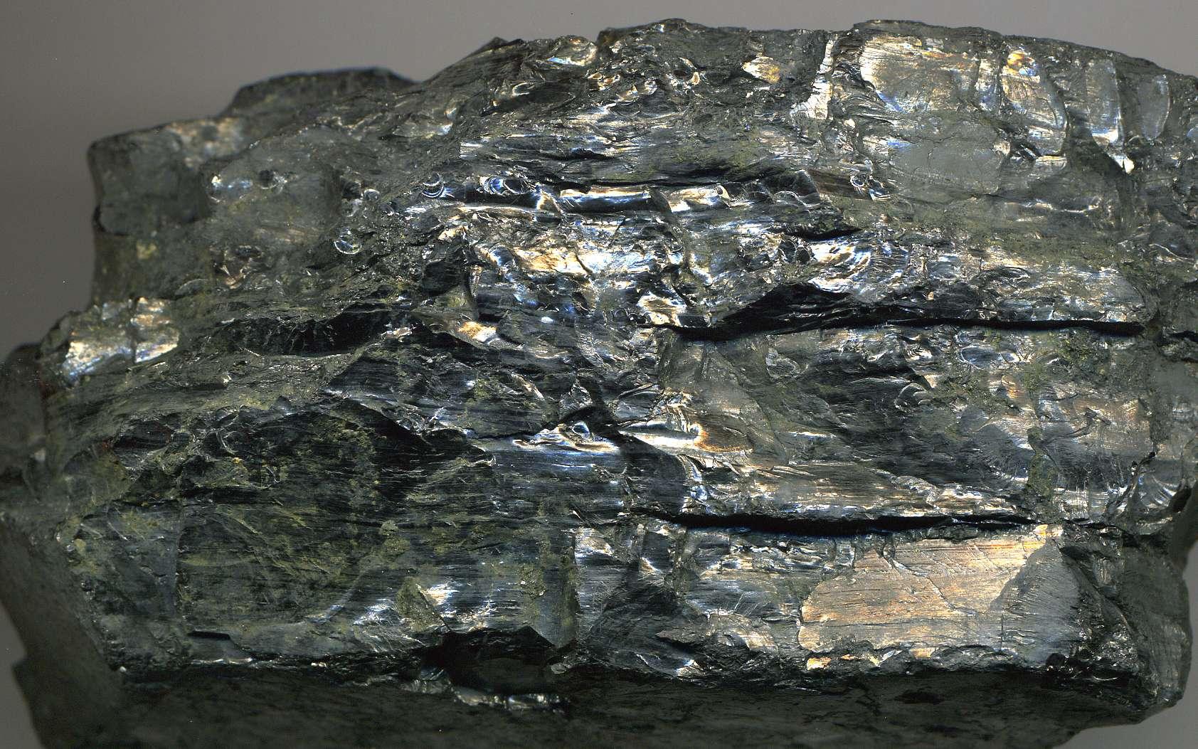 Comment se forme le charbon