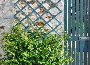 Ecran Treillis Jardin   Calgaryplus Info Luxure Les Collections De ...