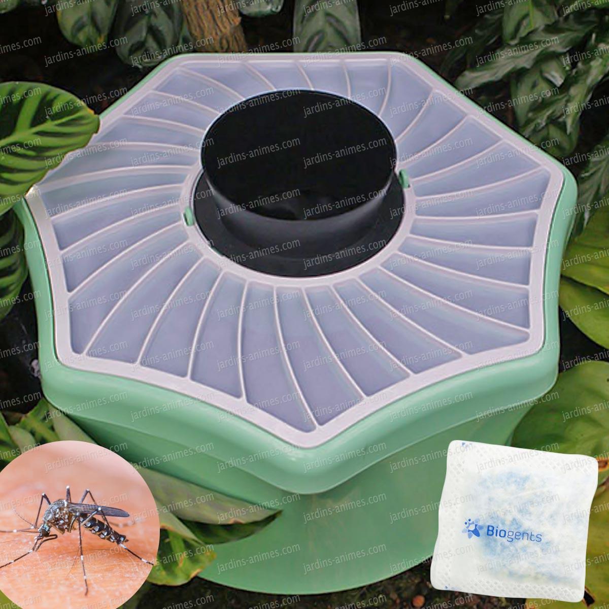 plante anti mouche un petit coin de paradis en bri re ravage des petites. Black Bedroom Furniture Sets. Home Design Ideas