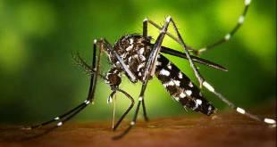 Zika gagne du terrain en Afrique