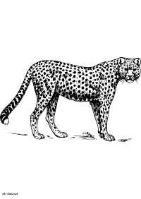 Dessin Panthere Noire Coloriage