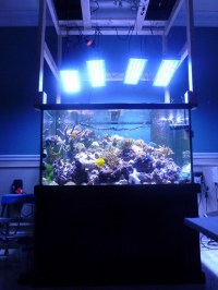 Aquarium clairage LED Photos | Orphek