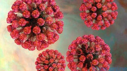 Virus de la rubéole